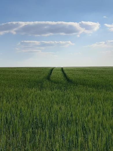 Ploughed Field Series 2020 June